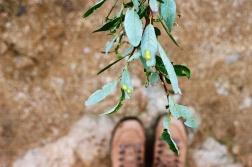 leaf feet