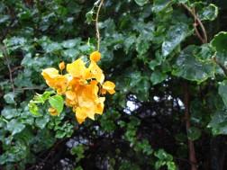 Rain Flowers