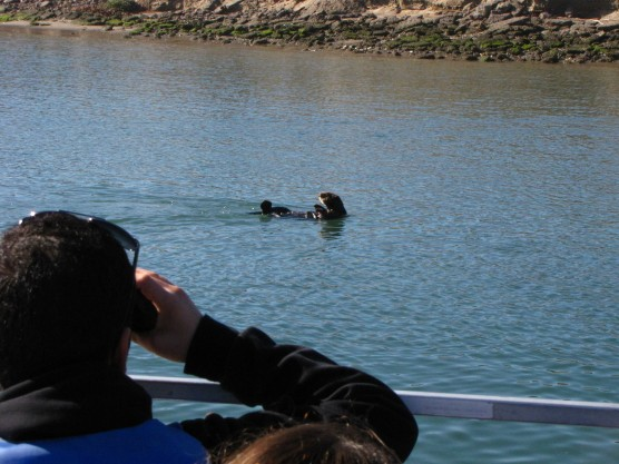 Kids checking out the otter.