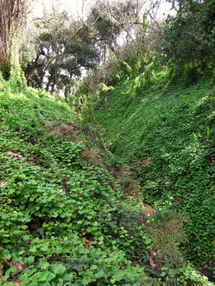 Lots of Ivy