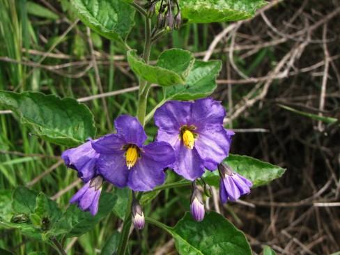 More Pretty Purple Flowers