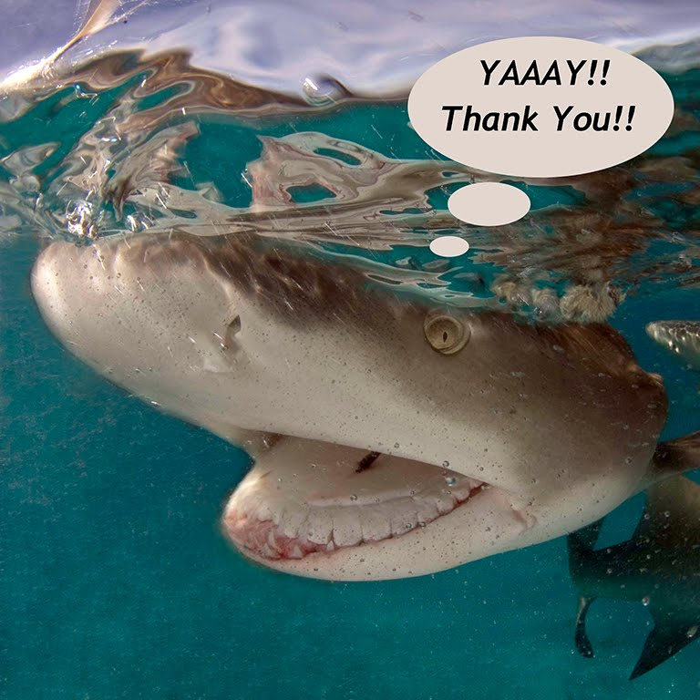 IF SHARKS COULD TALK..THEY'D BE SAYING THANK YOU!