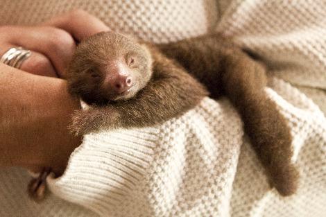 Awkward, Cute, And Funny= Sloths