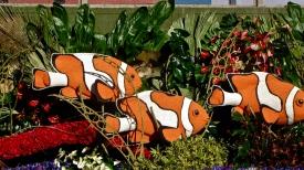 Found Nemo :)