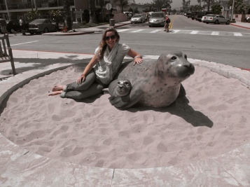 Harbor Seals!