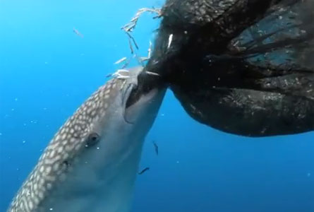 For that fish that sucks can