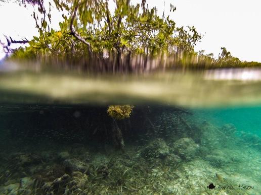Mangroves Puerto Rico