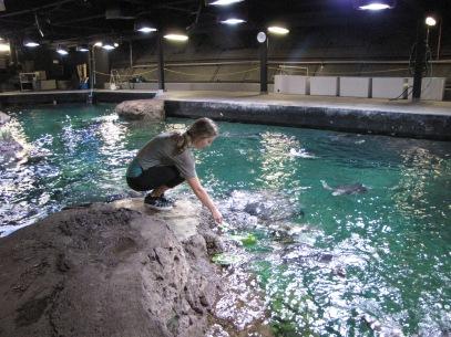 Feeding sea turtles at Sea World.