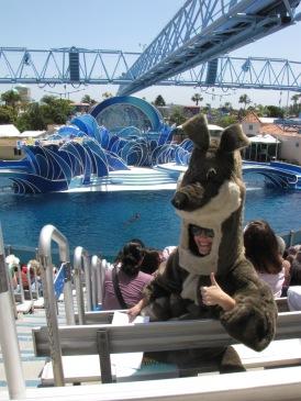 Dolphin show at Sea World!