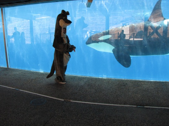 Exchanging deep conversations with an orca.