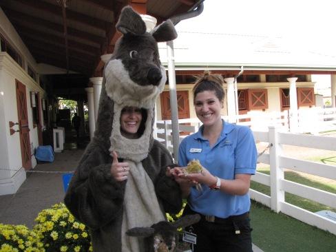 Meeting an Australian Bearded Dragon named Pancake.