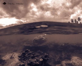 sea turtle, hawksbill, hawksbill sea turtle, ocean, underwater photography, gopro hero3, gopro