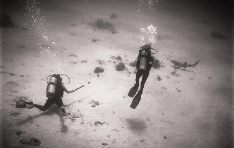 Desecheo Island, Puerto Rico, Scuba Divers, Nurse Shark